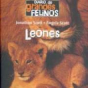 Diario de grandes felinos: Leones SD-02 9681680324